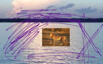 Cheetah | Educreations