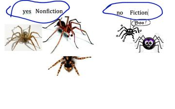 Cameryn. Spider