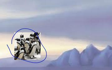 Penguin | Educreations