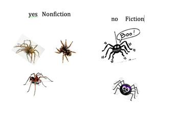 Breonna Spider